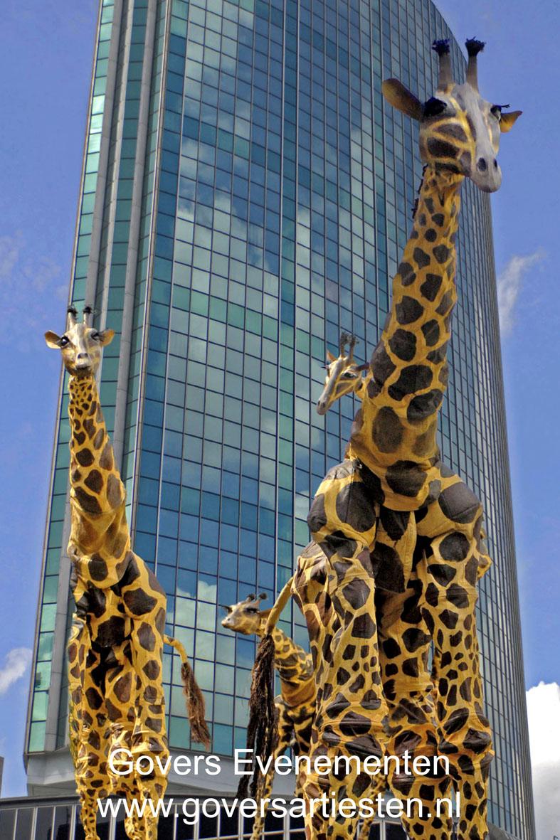 Giraffen, straattheater, steltenact, steltentheater, dierentuin, dieren op stelten, artiesten boeken, theater voor kinderen, Govers Evenementen