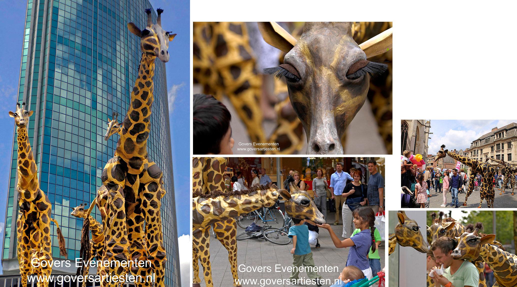 Giraffen, straattheater, steltenact, steltentheater, dierentuin, dieren op stelten, artiesten boeken, theater voor kinderen, Govers Evenementen, www.goversartiesten.nl