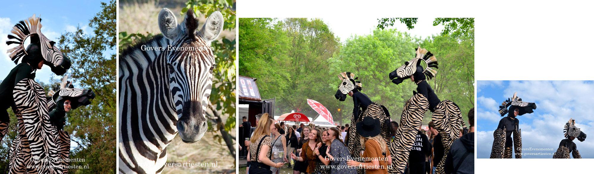 Zebra, zebra's. dieren op stelten, steltacts, stiltlife, steltenact, steltenacts, steltentheater, artiesten boeken, artiestenburo, artiestenbureau, straattheater op stelten, dierentuin, dierenact, dierentheater, theater voor kinderen, straattheateract, Govers Evenementen, evenement organiseren, thema act, straatfestival, www.goversartiesten.nl